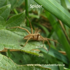 Spider Wildways Adventures