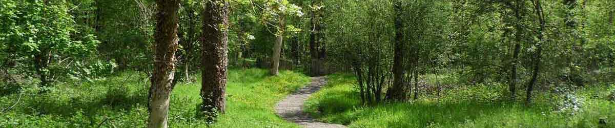 forest path in Carlow Ireland